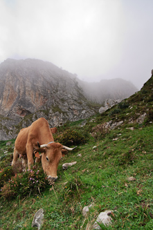 Where even the food is steep, Picos de Europa, Spain.